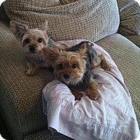 Adopt A Pet :: James - Goodyear, AZ