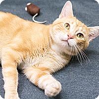 Adopt A Pet :: Mango - Chicago, IL