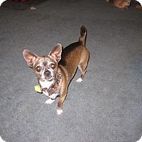 Adopt A Pet :: DK - st peters, MO