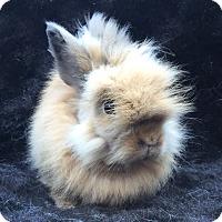 Adopt A Pet :: Quincy - Watauga, TX