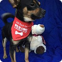 Adopt A Pet :: Lucky meet me 12/2 - Manchester, CT