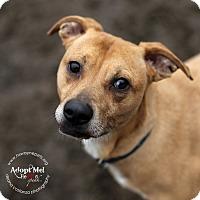 Adopt A Pet :: RayRay - Lyons, NY