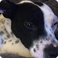 Adopt A Pet :: Lulu - Romeoville, IL