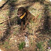 Adopt A Pet :: Chloe - Sherman, CT
