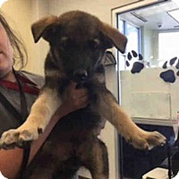 Adopt A Pet :: JAMES - San Antonio, TX