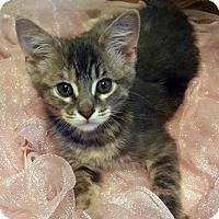Adopt A Pet :: Smudgie - Dallas, TX