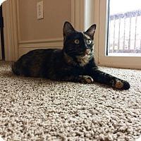 Adopt A Pet :: Tasha - Manhattan, KS