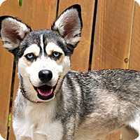 Adopt A Pet :: Faith - 29 pounds - Los Angeles, CA