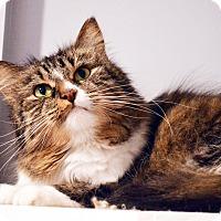 Adopt A Pet :: Venus - Lincoln, NE