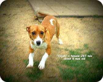 Jack Russell Terrier Mix Dog for adoption in Gadsden, Alabama - Ellie