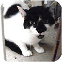 Adopt A Pet :: Lupin - El Cajon, CA