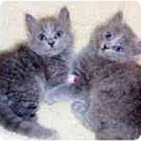 Adopt A Pet :: Eva & Emmy - Arlington, VA