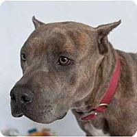 Adopt A Pet :: Kaiser - Orlando, FL