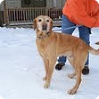 Adopt A Pet :: Cody - Lewisville, IN
