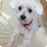 Adopt A Pet :: Matt - Gilbert, AZ
