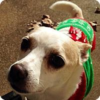 Adopt A Pet :: Jack - Garland, TX