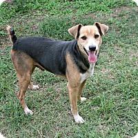 Adopt A Pet :: Rocco - Lufkin, TX