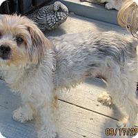 Adopt A Pet :: Lollypop - Oakley, CA