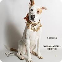 Adopt A Pet :: TRIGGER - Corona, CA