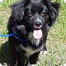 Adopt A Pet :: Theodore (12 lb) Sweet Boy