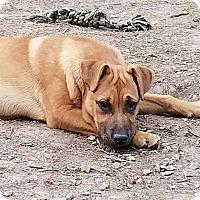 Adopt A Pet :: Kritter - chicago, IL