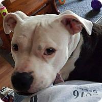 Adopt A Pet :: Nova - Acushnet, MA