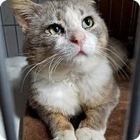 Adopt A Pet :: Butch - Jeannette, PA