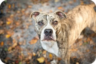 Terrier (Unknown Type, Medium) Mix Dog for adoption in Tinton Falls, New Jersey - Monte Carlo