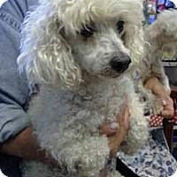 Adopt A Pet :: Kosita - Chicago, IL
