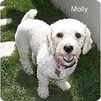 Adopt A Pet :: Missy & Molly - La Costa, CA
