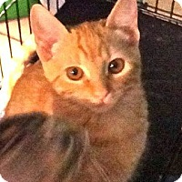 Adopt A Pet :: Mango - Escondido, CA