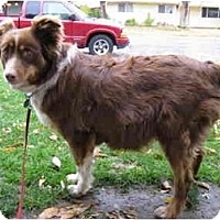 Adopt A Pet :: Robin - Meridian, ID