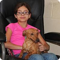 Adopt A Pet :: Ninja Norman - Brattleboro, VT