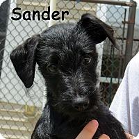 Adopt A Pet :: Sander - Warren, PA