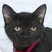 Adopt A Pet :: Ruby M - Sacramento, CA