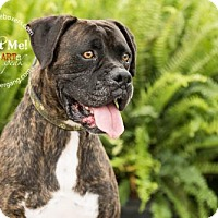 Adopt A Pet :: Kryten - Hurst, TX