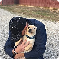 Adopt A Pet :: Prince - Brattleboro, VT