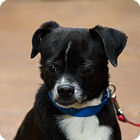 Adopt A Pet :: Thelma - Evansville, IN
