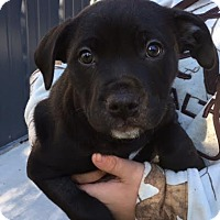 Adopt A Pet :: Templeton - Cashiers, NC