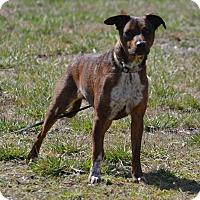 Adopt A Pet :: Titan - Lebanon, MO