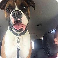 Adopt A Pet :: COOPER - Boise, ID