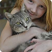 Adopt A Pet :: MONTE -Lover boy! (NSB) - New Smyrna Beach, FL