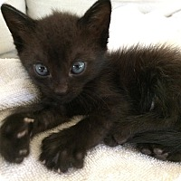 Adopt A Pet :: Pearl - Christiansted, VI