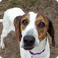 Adopt A Pet :: Padma - Grayslake, IL