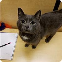Adopt A Pet :: Sir Pickles Pennybottom - PS - Kalamazoo, MI