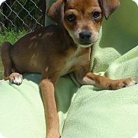 Adopt A Pet :: Nala - Manning, SC