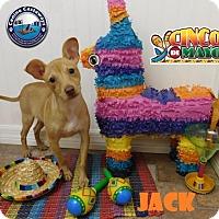 Adopt A Pet :: Jack - Arcadia, FL