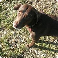 Adopt A Pet :: Mocha - San Francisco, CA