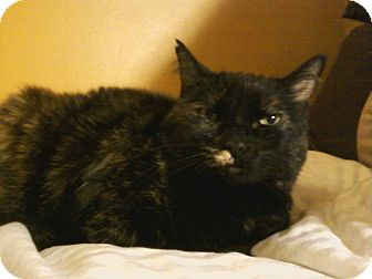 Domestic Shorthair Cat for adoption in Medford, Massachusetts - Lucy