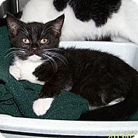 Adopt A Pet :: Gordon - Dover, OH